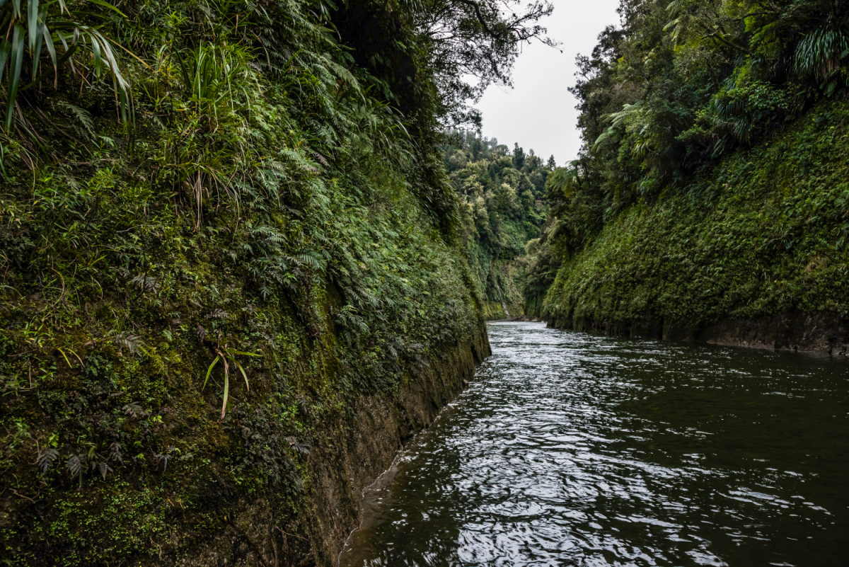 Traveller with Little Time Tour - Whanganui River Adventures